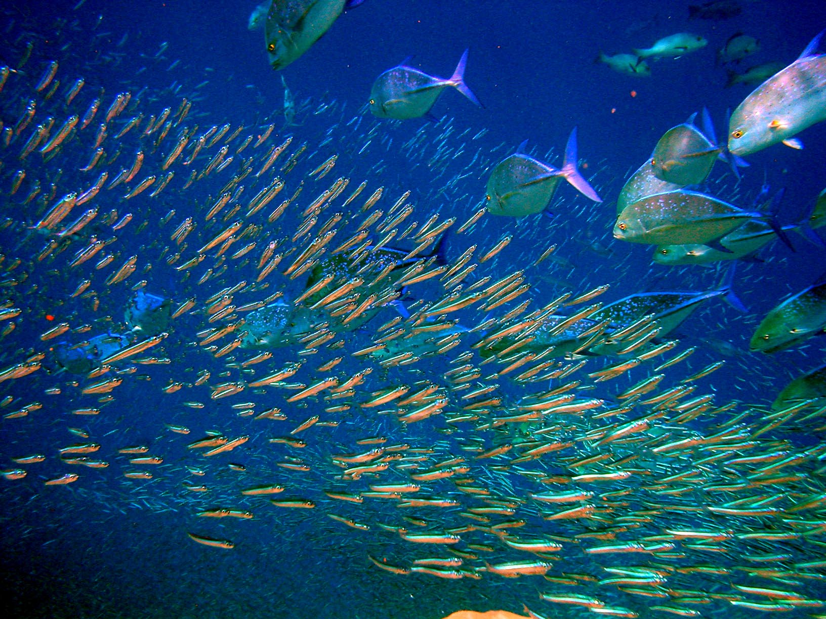types of fish in los suenos