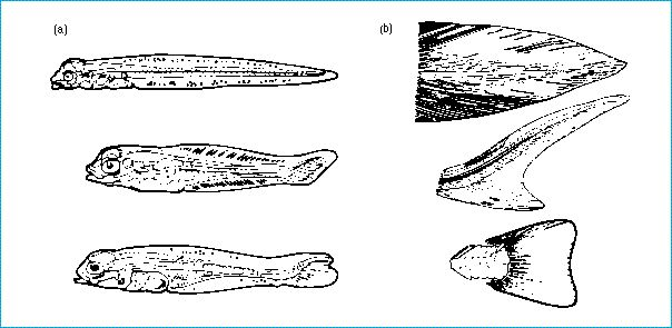 types of fish tails
